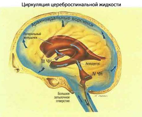 травмы шеи у младенцев Описание и отзывы о препарате Клоназепам