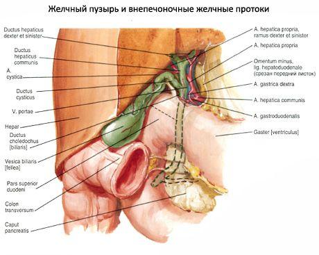 еда от паразитов в организме