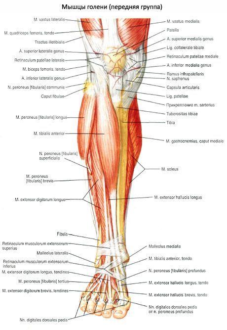 Растяжение мышц голени: симптомы и лечение