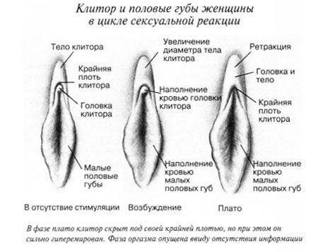 klitor-vo-vremya-polovogo-akta