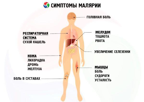 Инкубационный период малярии