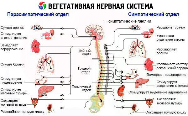 Прогрессирующая вегетативная недостаточность. Клиника прогрессирующей вегетативной недостаточности.