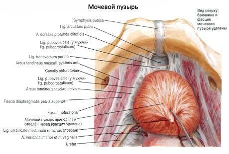 Папиллома или гемангиома