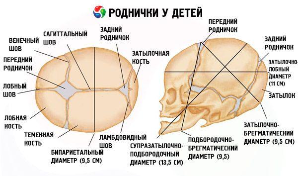 Большой) расположен на макушке, в теменной области.