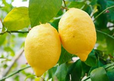 При беременности хочется лимон