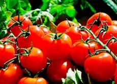 Хочется помидоров при беременности кто будет