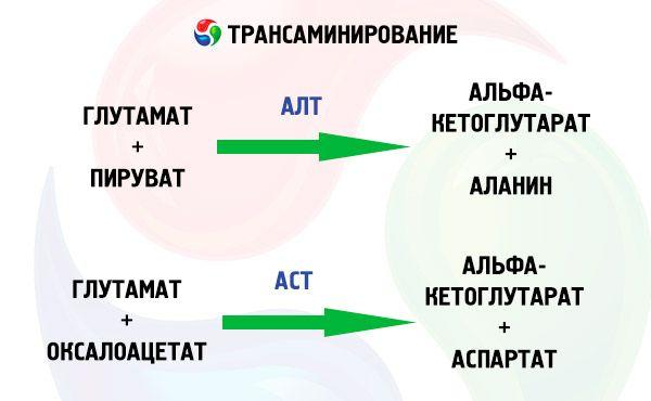 Аланинаминотрансфераза (АЛТ) в крови : причины повышения и ...