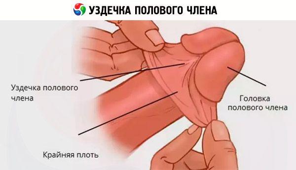 Подготовка мужского члена к сексу фото 226-511
